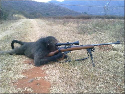 Baboon Sniper - No Big Deal